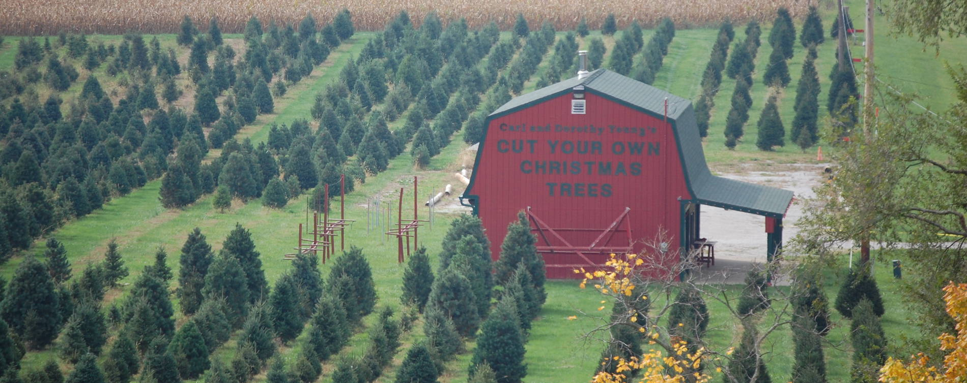 Tree Farm Near Me.Trendy Ideas Christmas Trees Near Me U ...